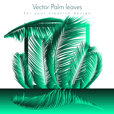 Palm Leaf Vector Illustration EPS10. Tropical Leaves. Realistic Coconut Foliage Set. Floral Elements. Collection of Jungle Plants. Summer Palm Leaf for Pattern, Print, Fabric or Your Trendy Design. Ilustração