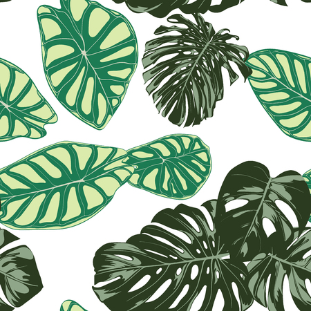 Seamless Exotic Pattern with Tropical Plants. Vector Background with Hand Draw Monstera Palm Leaves. Bright Rapport for Cloth, Textile Design. Jungle Foliage. Seamless Tropical Pattern with Alocasia. 일러스트