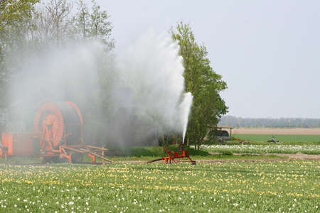 Watering the tulip fields in the polder Stock Photo