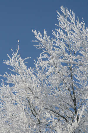 This frosted tree looks like winterwonderland Stock Photo - 14031858