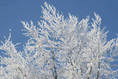 Artwork of nature in winter Stock Photo - 14031855