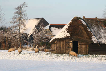 A typical Dutch sheepfold in the snow Stock Photo - 16754119