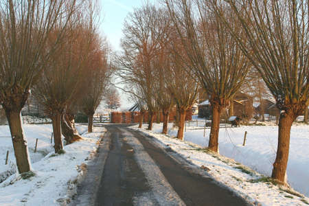 Small road between the willows in the polder photo