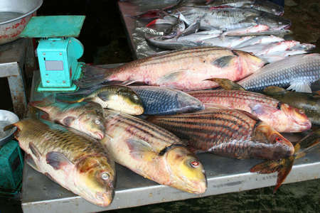 Fresh fish for sale at the market