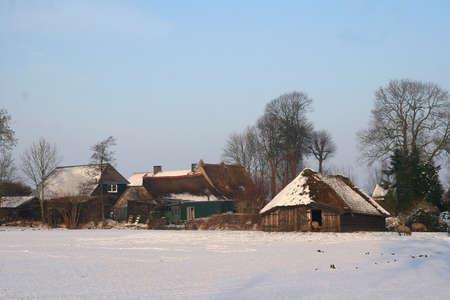 sheepfold: Farm and sheepfold in a Dutch polder