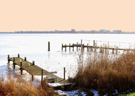 cane plumes: View from a frozen IJsselmeer at the skyline of Amsterdam
