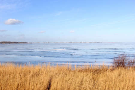 cane plumes: Landscape with a frozen IJsselmeer near Amsterdam Stock Photo
