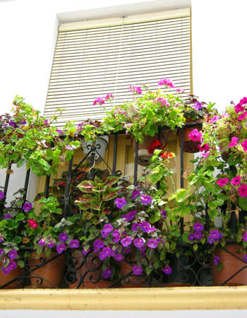 lizzie: A balcony with blooming Busy Lizzie against a white wall in Andalusia Stock Photo