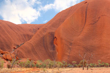 Landscape with burnt gum trees and the rocks of Uluru in the heart of the Australian Outback