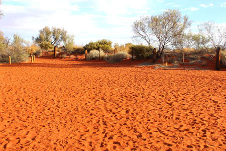 Red sand dunes in the red centre of Northern Territory  Australia Stock Photo - 20503030
