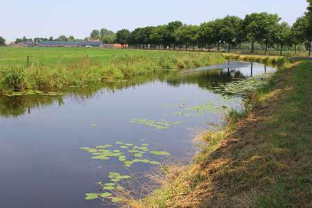 Netherlands, july 22, 2013 Landscape with a ditch and reedmace in a Dutch polder around Amsterdam