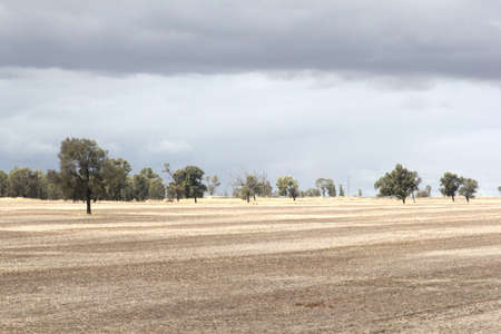 Background landscape with trees and grain fields for the export in South Australia  photo