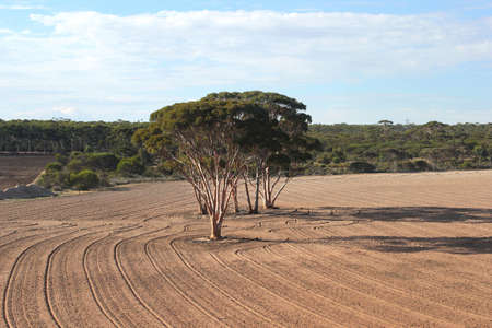 Background desolate landscape in Western Australia in the neighbourhood of Perth photo