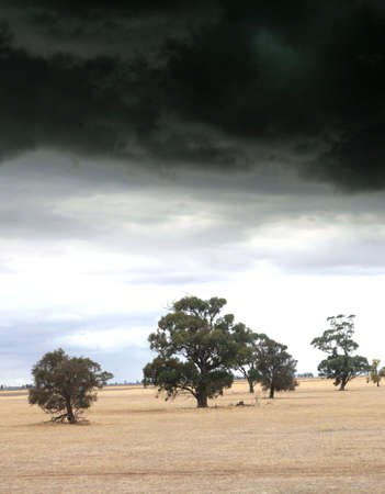 severe weather: Thunderstorm and severe weather above a plain with trees