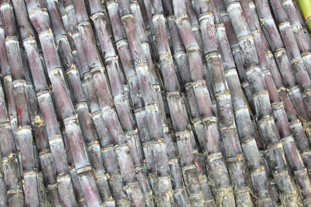 fabricate: Chinese bamboo in detail; bamboo is very strong and is used as food and to fabricate furniture, bamboo rafts, floor coverages and scaffoldings Stock Photo