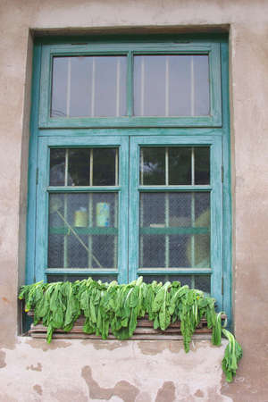 Blue window-frame with Bok Choy drying in the sun in China photo