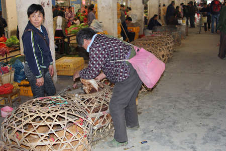 Xingping, Guilin, China, november 2013 People are selling and bying live chickens at the market;  chickens can transfer Sars virus and H7N9 virus in China en can transfer diseases to Europe, Asia and the USA Stock Photo - 25323786