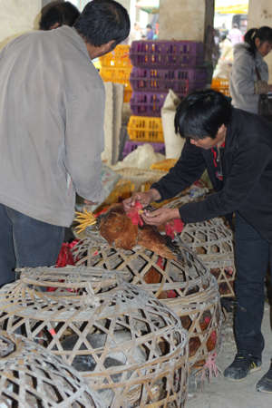 Xingping, Guilin, China, november 2013 People are  buying and selling live chickens at the market; chickens can transfer Sars virus and H7N9 virus in China en can transfer diseases to Europe, Asia and the USA