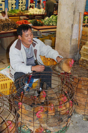 topicality: Guilin, China, november 2013 Man sells live chickens which can transfer Sars virus and the H7N9 viruses in China, Asia, Europe and USA