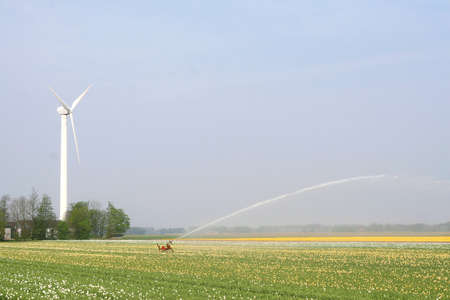 polder: Windmill provides energy for sprinkling the tulip fields in the North East Polder in the Netherlands Stock Photo