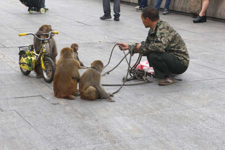 China, november 2013 Show of a street artist with circus monkeys on a bike