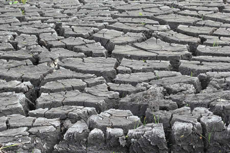 slits: Slits in a dry soil by erosion, an artwork of nature  Stock Photo