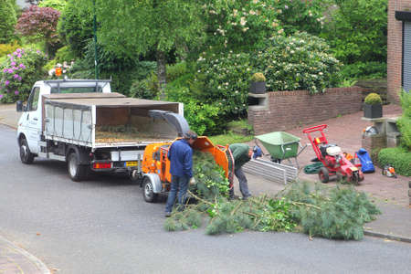 soest: Soest, Netherlands, may 2014 Gardeners are felling a tree and put the branches in a wood chipper