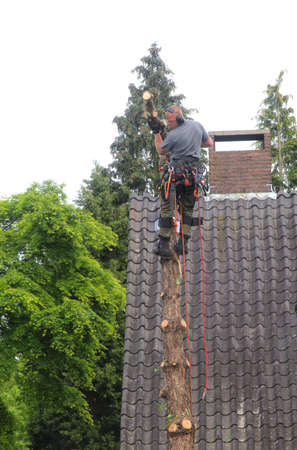 soest: Soest, Netherlands, may 2014 Garderer is cutting down a tree with an elecric saw