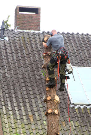 soest: Soest, Netherlands, may 2014 Workman is felling a tree with an elecric saw Editorial