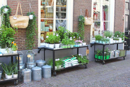 kamille: Amersfoort,Netherlands, 2014 Trendy florist shop in the city centre of Amersfoort