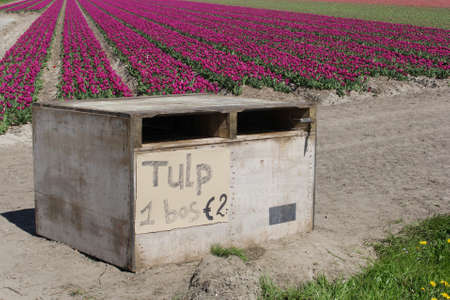 bunches: Bunches of tulips for sale along the touristic bulb route in the Noordoostpolder, Netherlands