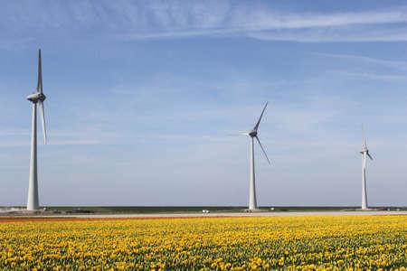 flevoland: Windturbines in yellow tulip fields in Flevoland, Noordoostpolder, Netherlands Stock Photo