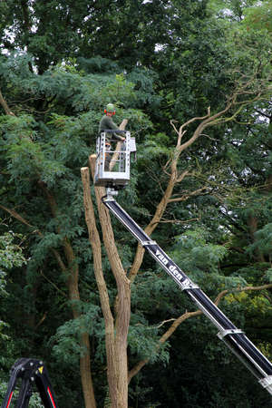 horticulturist: Soest, Netherlands, 8 Septmber 2015, A horticulturist in a cherry picker is a big tree trimming Editorial
