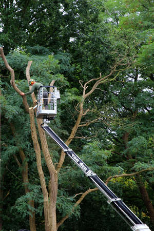 soest: Soest, Netherlands, September 8, 2015, A gardener in a hydraulic hoist is cutting back a big tree