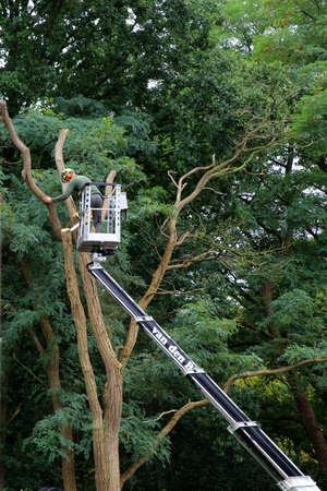 soest: Soest, Netherlands, September 8, 2015, A gardener in a hydraulic hoist is cutting back a big tree