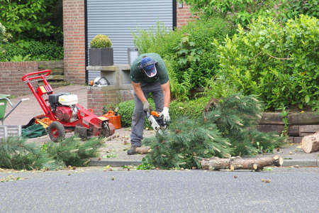 snips: Soest, Netherlands, May 2014, Gardener is sawing the branches of a tree with an electric chainsaw