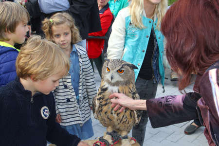 soest: Soest, Netherlands, September 2015, Adults and children are petting a wild eagle owl