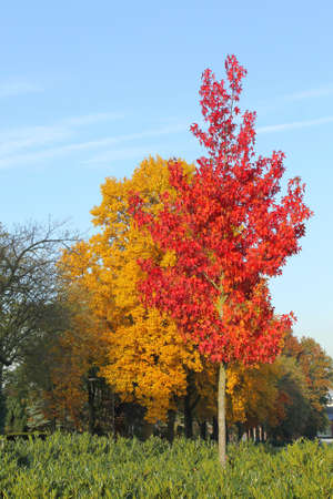 specifies: Red and yellow autumn colors in the forest