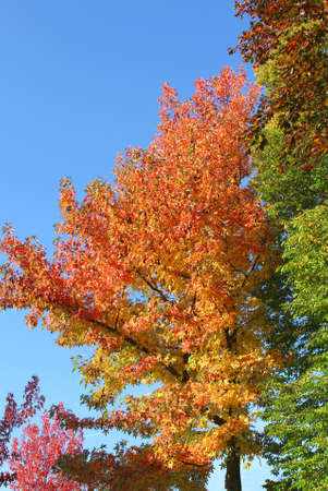specifies: Trees in almost all colors of the rainbow in autumn Stock Photo