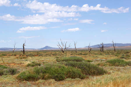 ranges: Dead trees and mountains in Flinders Ranges National Park, South Australia