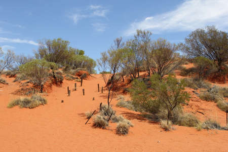 red centre: Red sand dunes landscape in the Red Centre, Australia