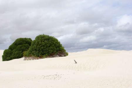 western australia: White sand dunes in Nambung National Park, Western Australia