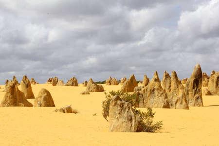 western australia: Panorama of the Pinnacles Desert, Nambung National Park, Western Australia