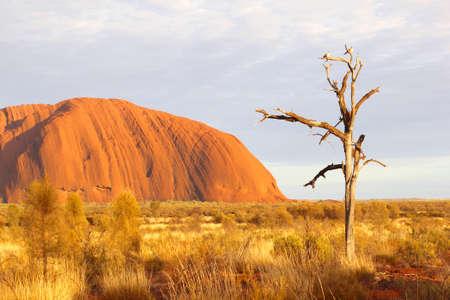 ayers: Yulara, Northern Territory, in December 2015 Birds in a dead tree and sunrise Uluru or Ayers Rock at dawn, Northern Territory, Australia