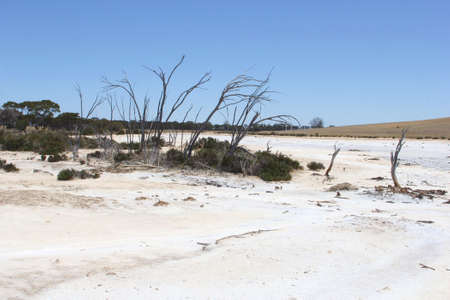 surreal landscape: Dead trees in a surreal landscape salt lake between Hyden and Ravensthorpe, Western Australia