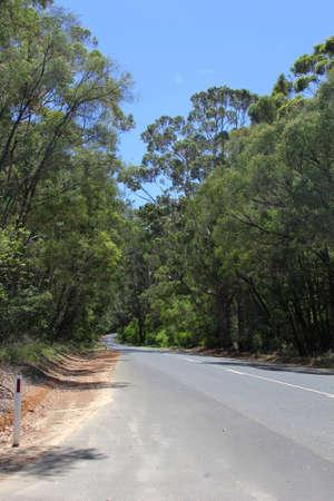 karri: Road through the Karri trees forest, Australia