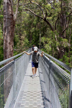 karri: Walpole Nornalup, Western Australia, in December 2015 Tourists are walking the Tree Top Walk in the Valley of the Giants