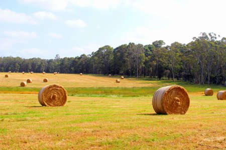 western australia: Agricultural landscape with haybales, Western Australia