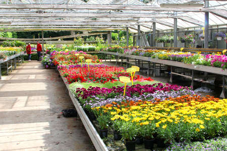 garden center: Baarn, Netherlands, June 2016 Couple is buying flowers and plants in a greehouse of a garden center