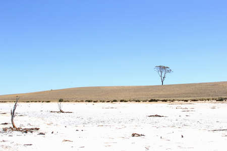 western australia: Salt lake and lonely tree Landscape, Western Australia
